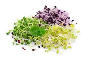 les graines germées: un sérieux atout pour votre santé!